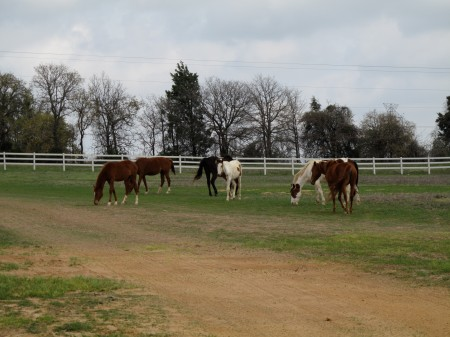 some of my horses!